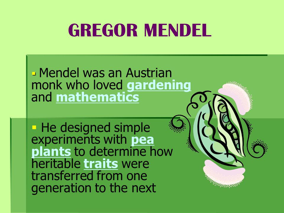 GREGOR MENDEL Mendel was an Austrian monk who loved gardening and mathematics.