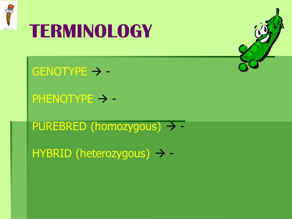 TERMINOLOGY GENOTYPE  - PHENOTYPE  - PUREBRED (homozygous)  -
