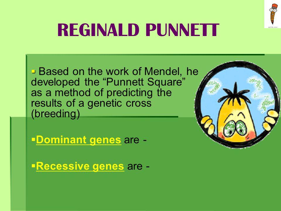 REGINALD PUNNETT Dominant genes are - Recessive genes are -