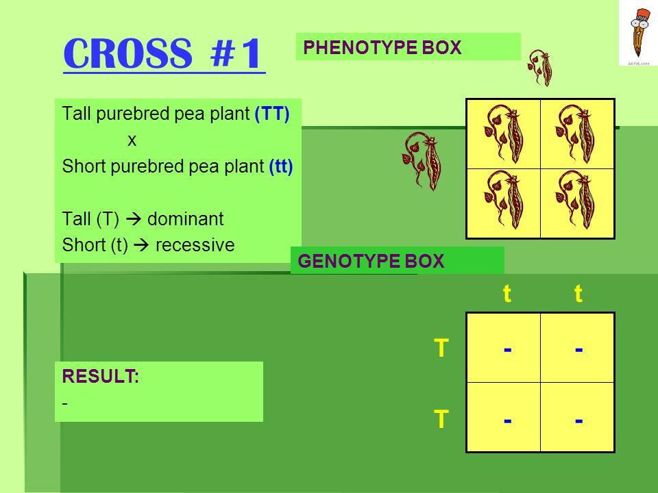 CROSS #1 t t T - - T - - PHENOTYPE BOX Tall purebred pea plant (TT) x