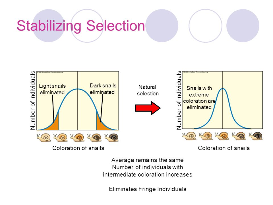 Stabilizing Selection
