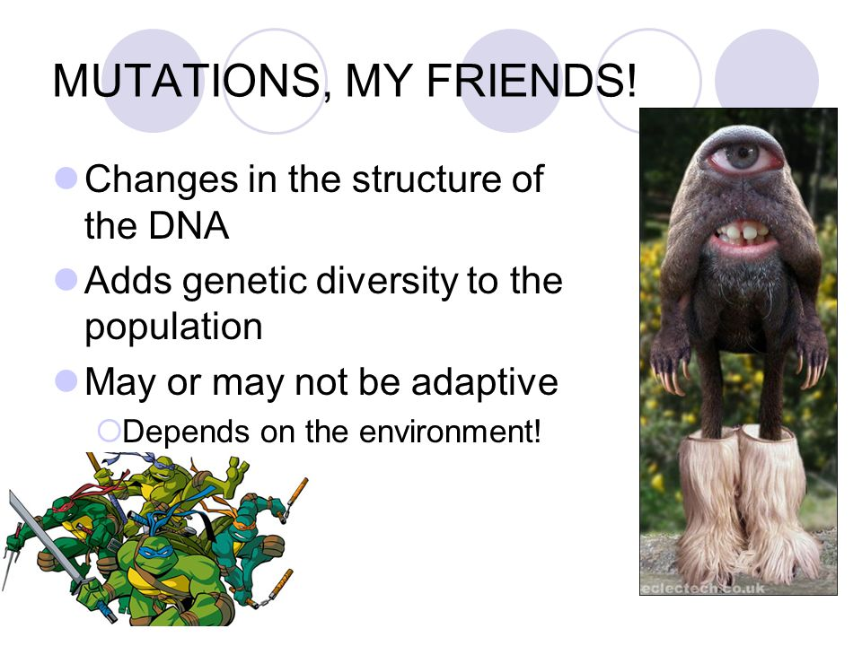 MUTATIONS, MY FRIENDS! Changes in the structure of the DNA