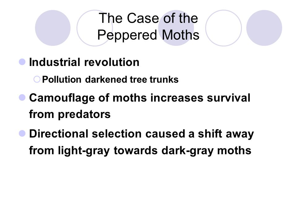 The Case of the Peppered Moths