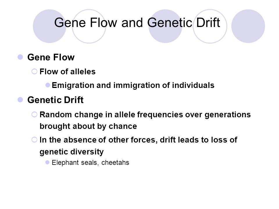Gene Flow and Genetic Drift