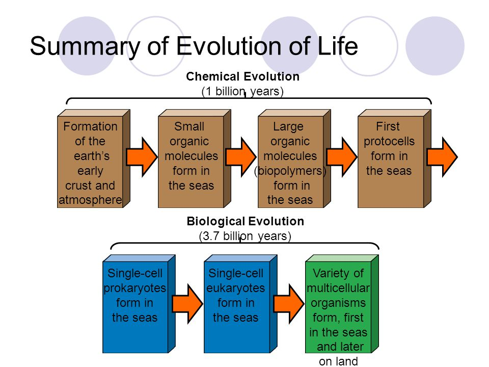 Summary of Evolution of Life