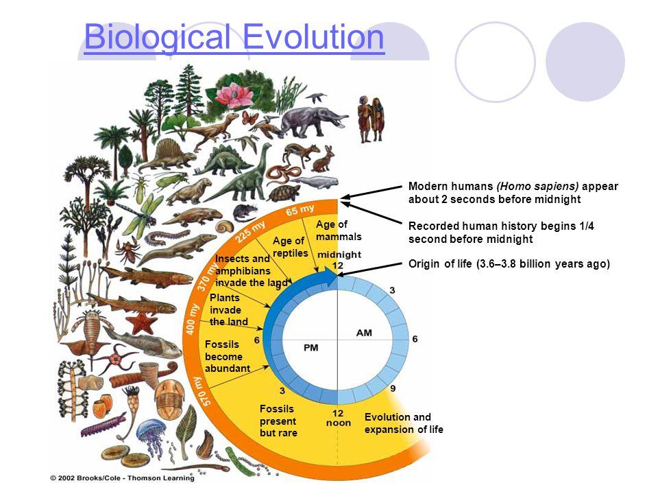 Biological Evolution Fossils present but rare. Evolution and expansion of life. Fossils become abundant.