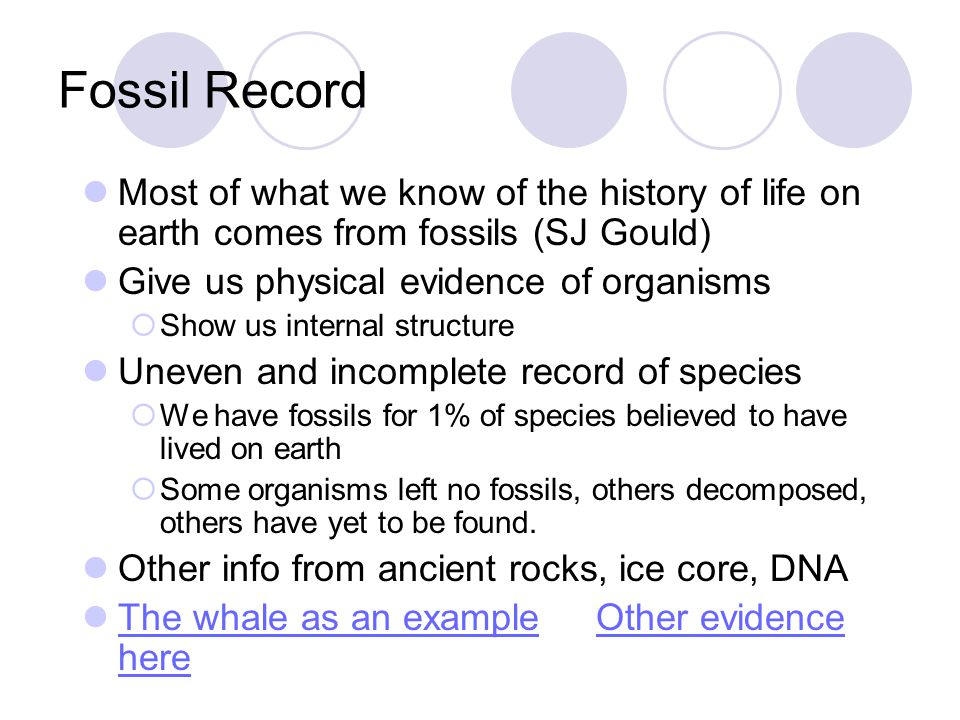 Fossil Record Most of what we know of the history of life on earth comes from fossils (SJ Gould) Give us physical evidence of organisms.