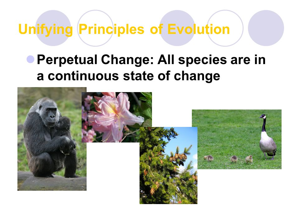 Unifying Principles of Evolution