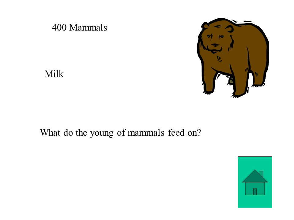 400 Mammals Milk What do the young of mammals feed on