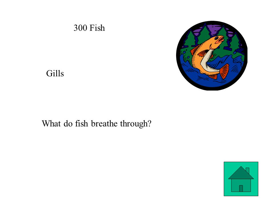300 Fish Gills What do fish breathe through