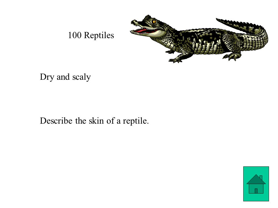 100 Reptiles Dry and scaly Describe the skin of a reptile.