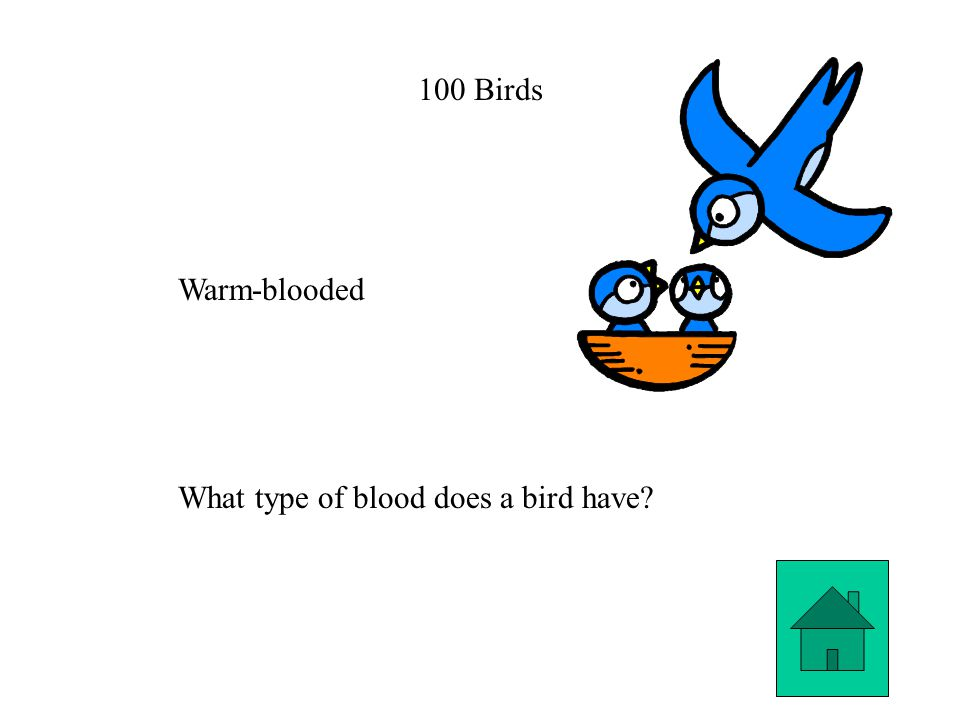 100 Birds Warm-blooded What type of blood does a bird have
