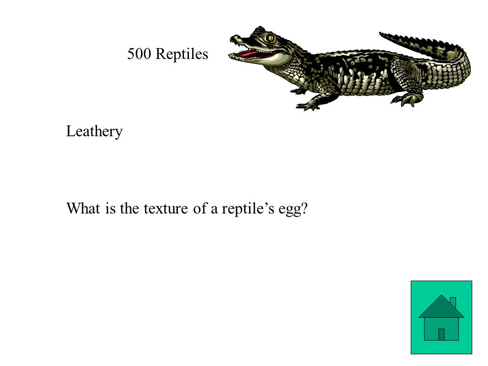 500 Reptiles Leathery What is the texture of a reptile's egg