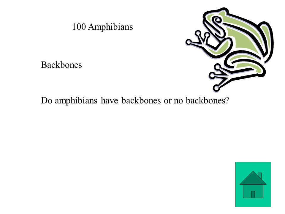 100 Amphibians Backbones Do amphibians have backbones or no backbones