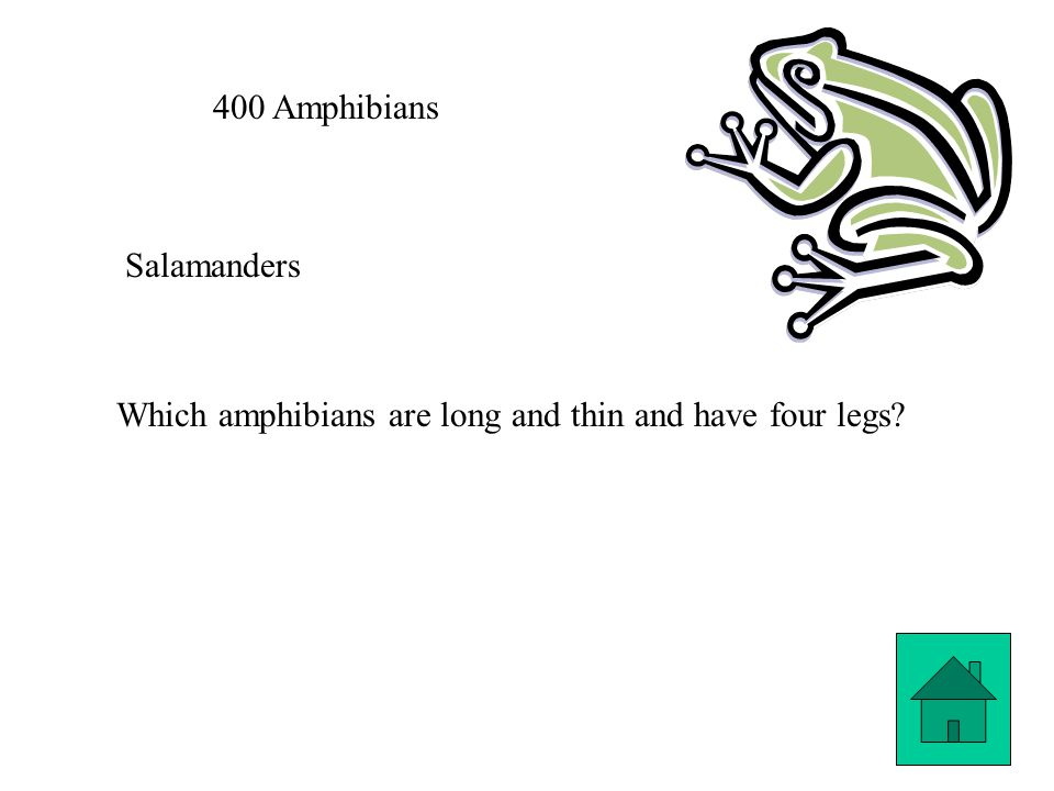400 Amphibians Salamanders Which amphibians are long and thin and have four legs