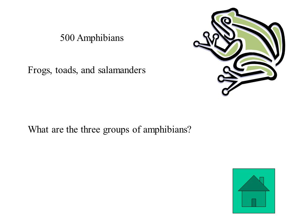 500 Amphibians Frogs, toads, and salamanders What are the three groups of amphibians