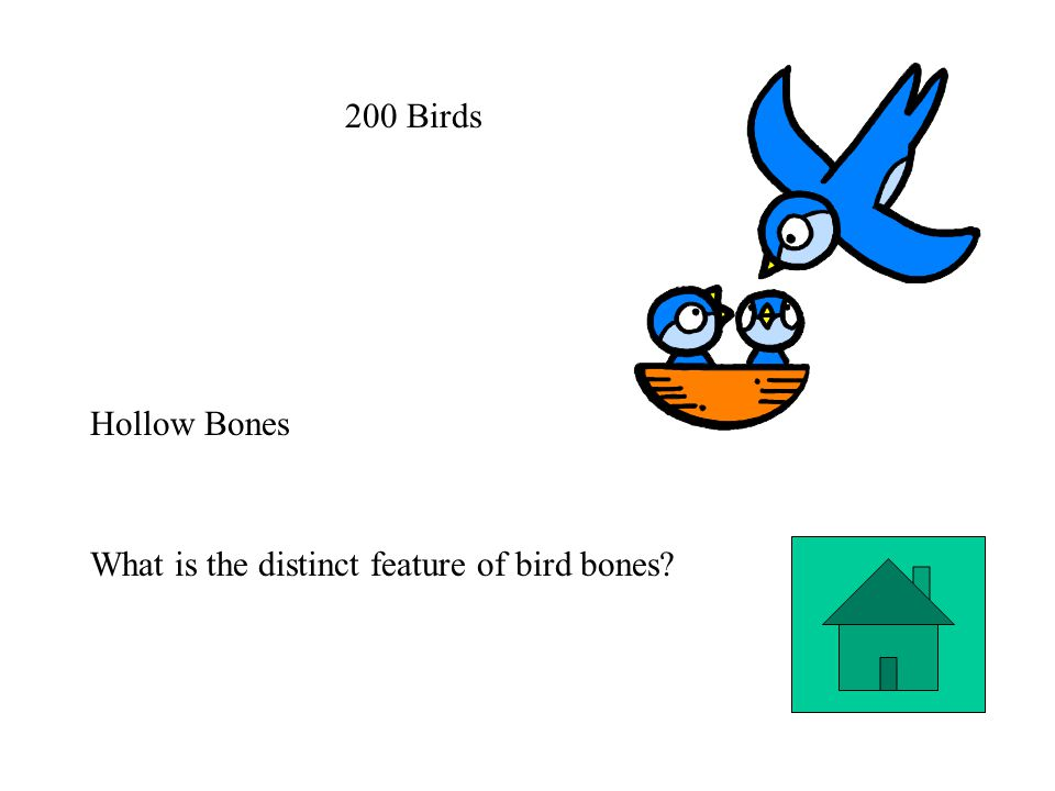 200 Birds Hollow Bones What is the distinct feature of bird bones