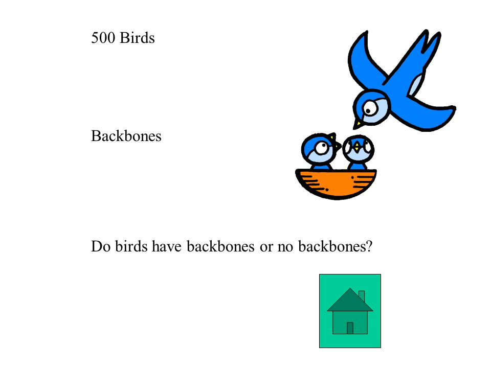 500 Birds Backbones Do birds have backbones or no backbones