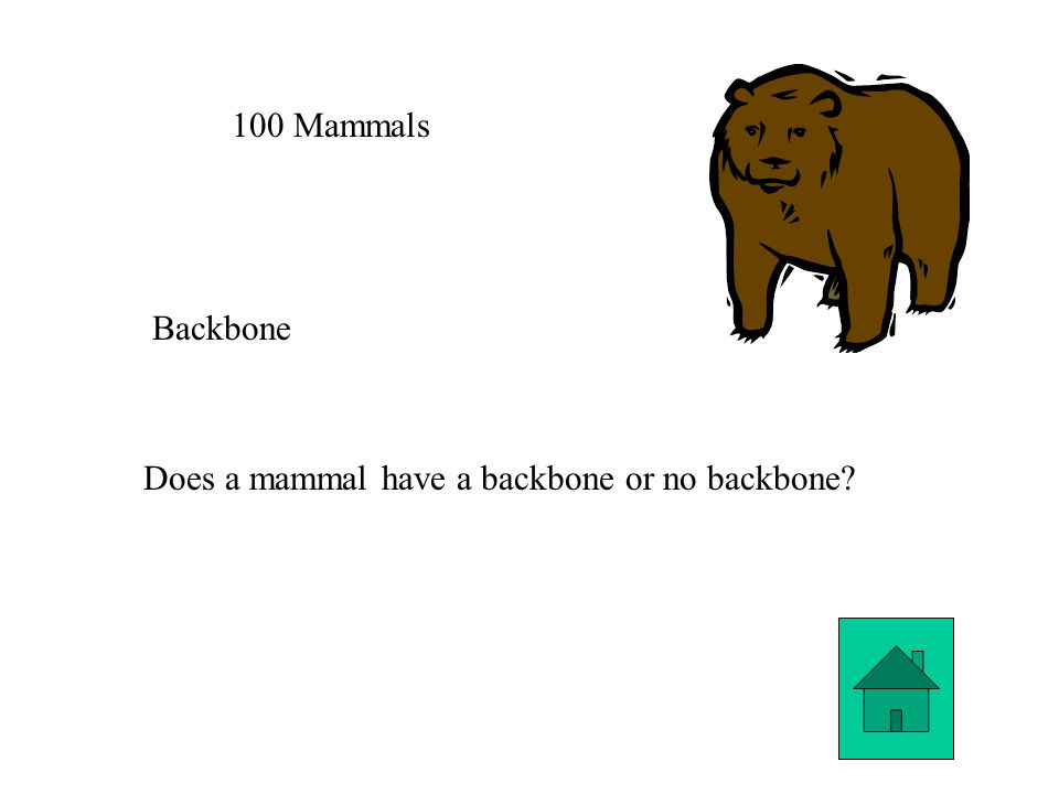 100 Mammals Backbone Does a mammal have a backbone or no backbone
