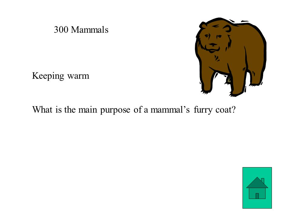300 Mammals Keeping warm What is the main purpose of a mammal's furry coat