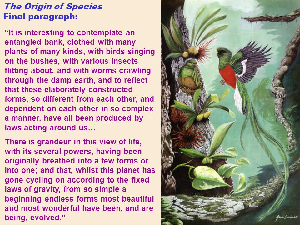 The Origin of Species Final paragraph: