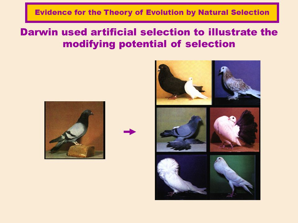 Evidence for the Theory of Evolution by Natural Selection