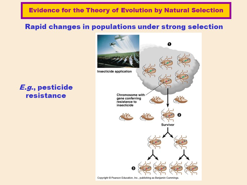 Rapid changes in populations under strong selection