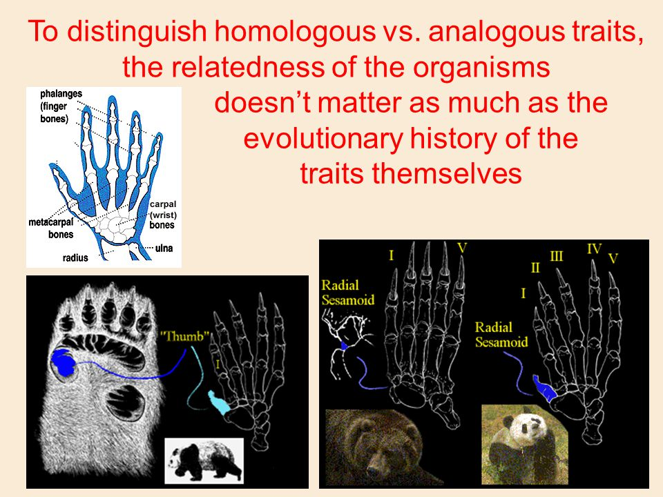 To distinguish homologous vs