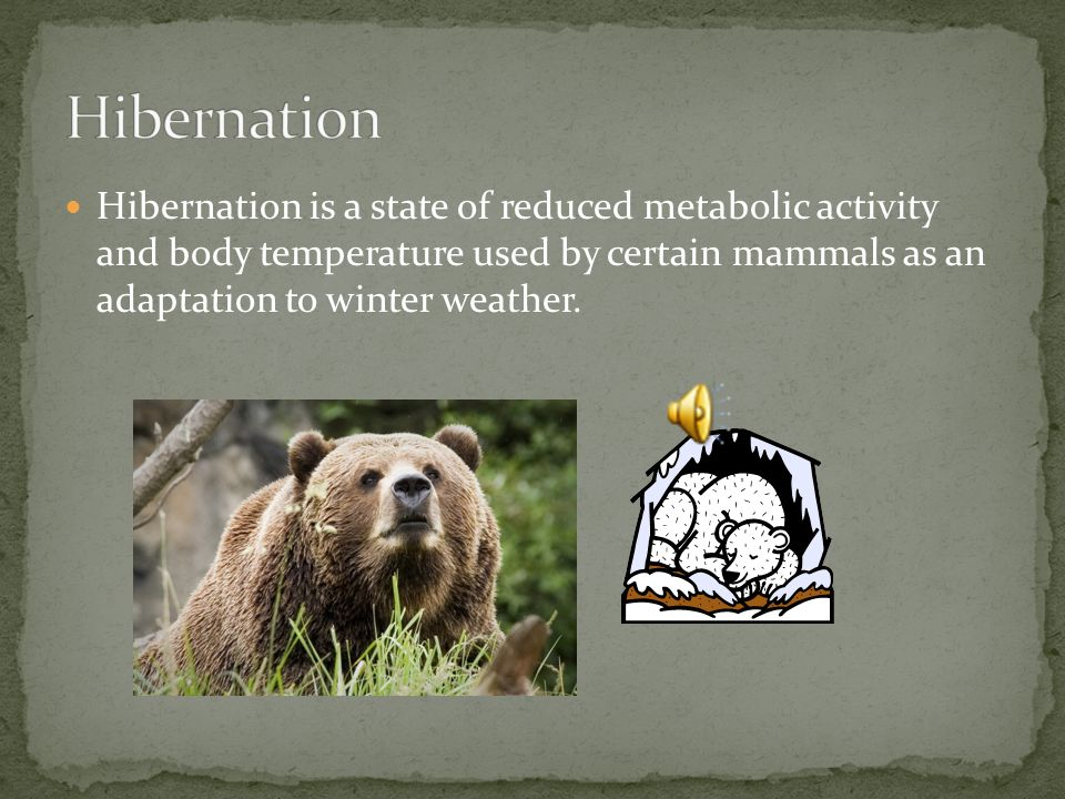 Hibernation Hibernation is a state of reduced metabolic activity and body temperature used by certain mammals as an adaptation to winter weather.