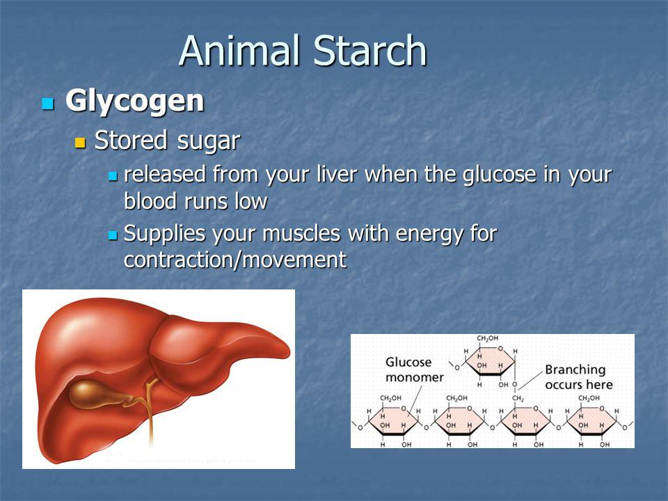Animal Starch Glycogen Stored sugar