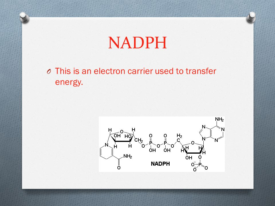 NADPH This is an electron carrier used to transfer energy.