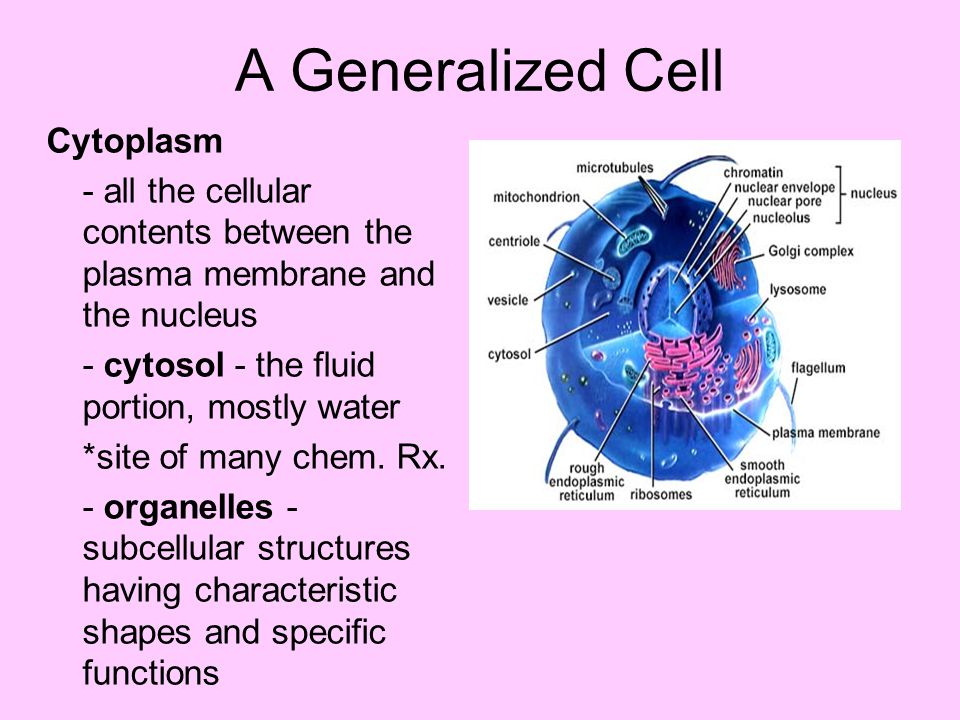 A Generalized Cell