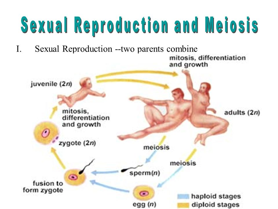 sexual reproduction pictures approaches