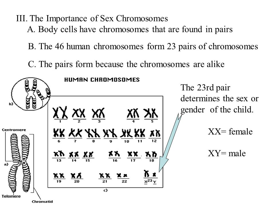 III. The Importance of Sex Chromosomes