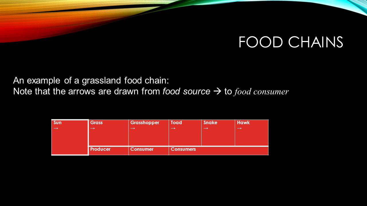 Food Chains An example of a grassland food chain:
