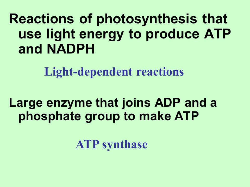 Reactions of photosynthesis that use light energy to produce ATP and NADPH