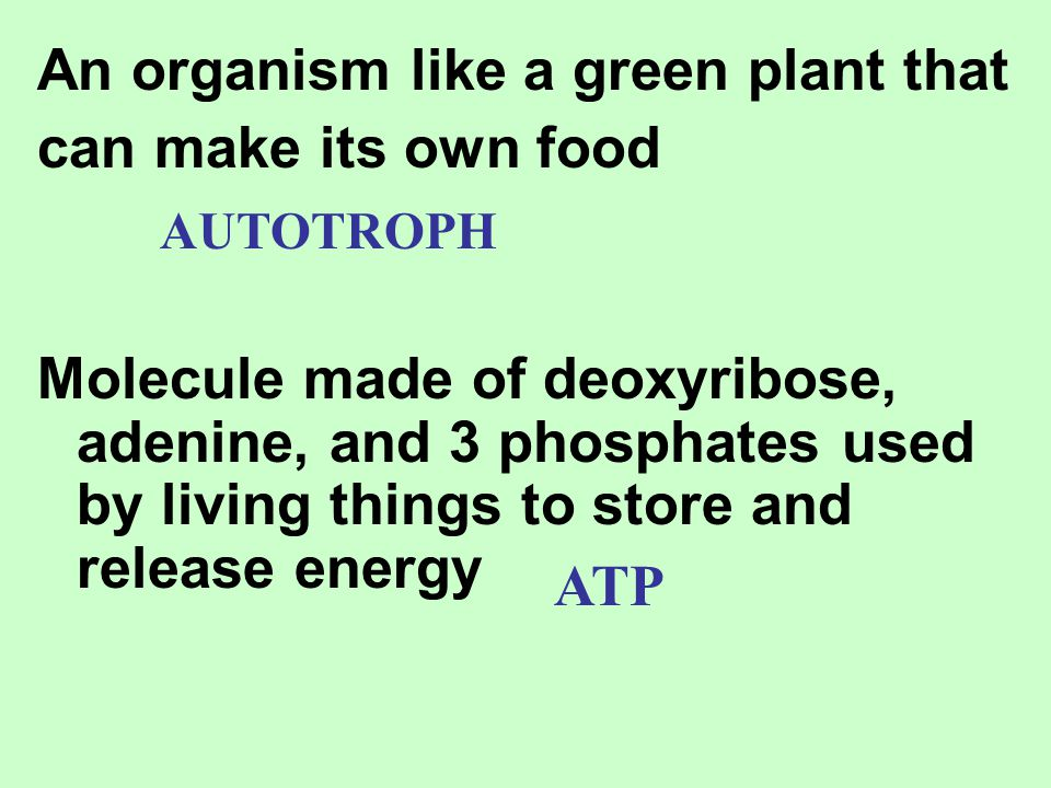 An organism like a green plant that can make its own food
