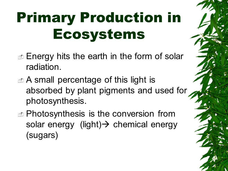 Primary Production in Ecosystems