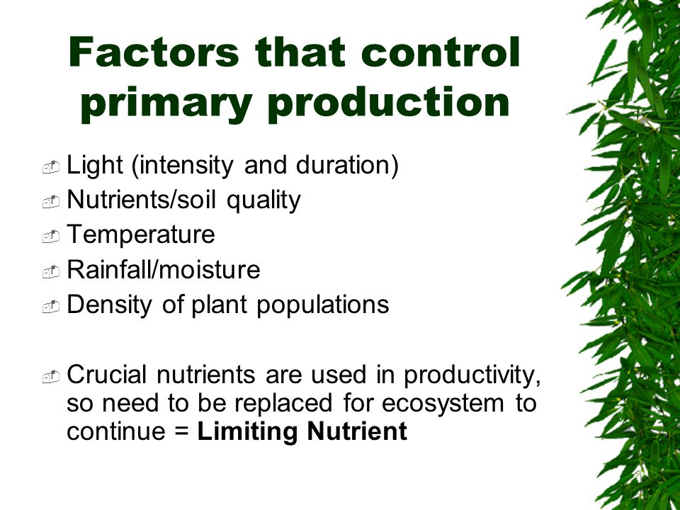 Factors that control primary production