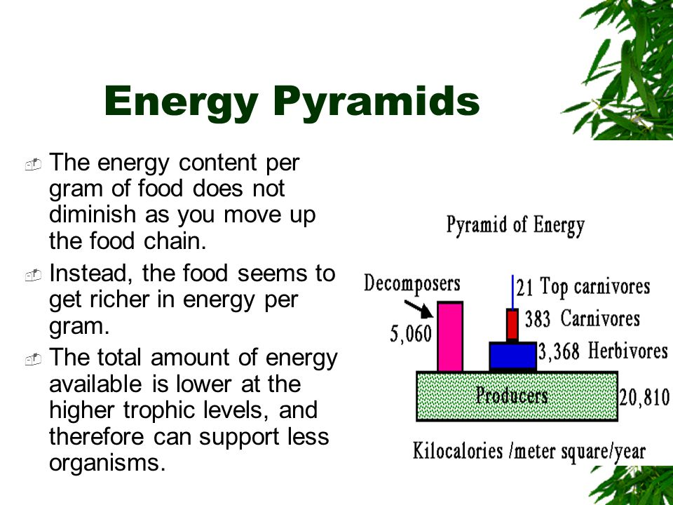 Energy Pyramids The energy content per gram of food does not diminish as you move up the food chain.