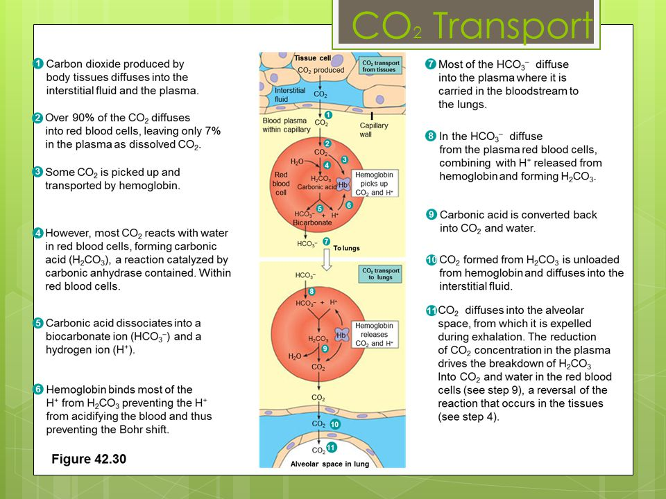 CO2 Transport