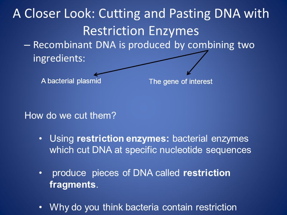 A Closer Look: Cutting and Pasting DNA with Restriction Enzymes