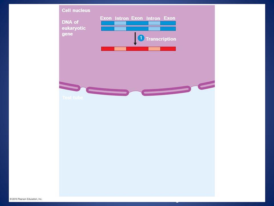 Figure 12.11-1 Cell nucleus Exon Intron Exon Intron Exon DNA of