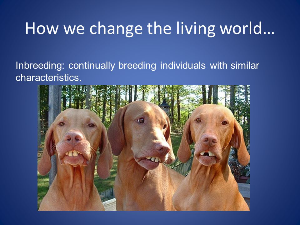 How we change the living world…