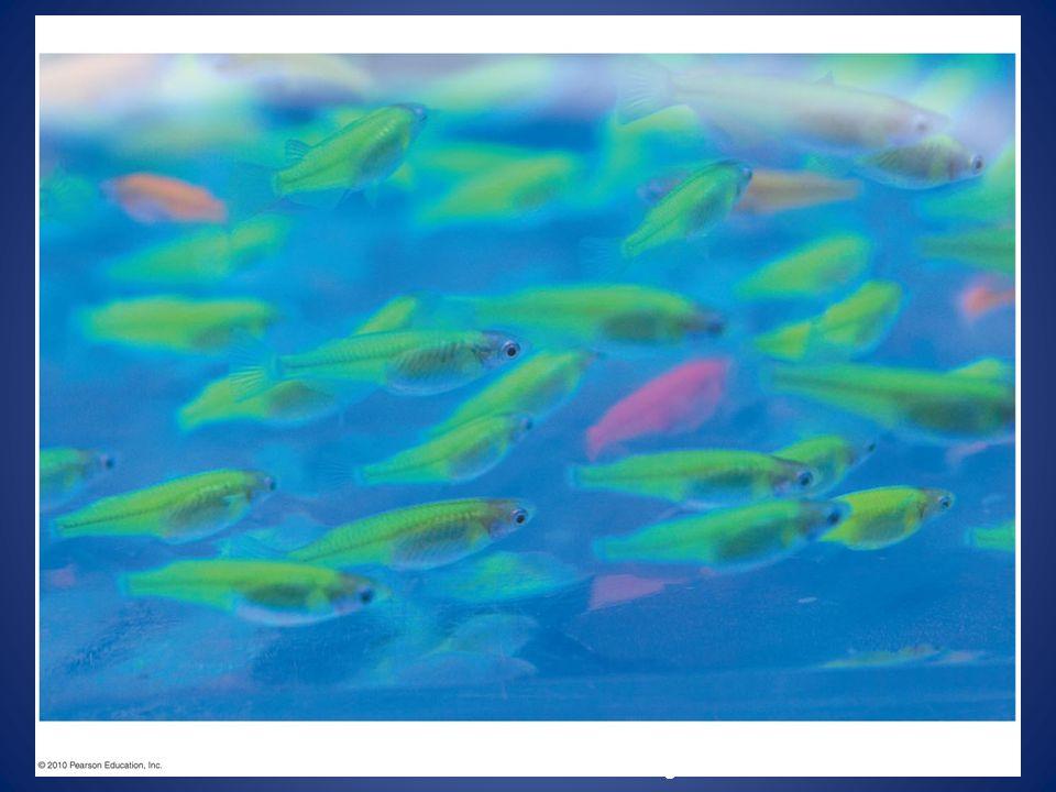 Figure 12.1 Glowing fish Figure 12.1