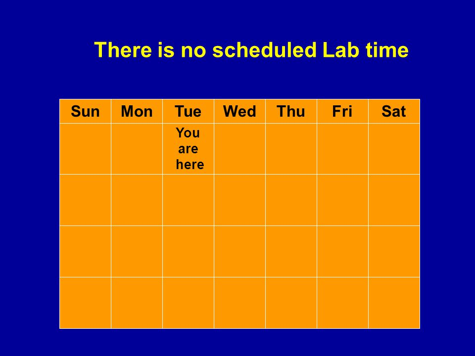 There is no scheduled Lab time