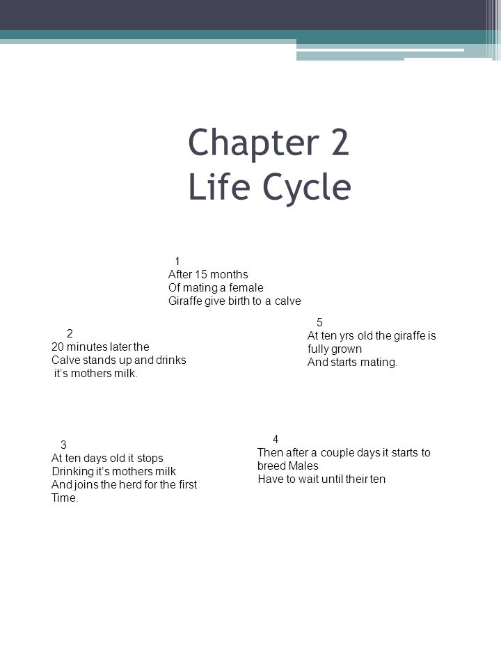 Chapter 2 Life Cycle 1 After 15 months Of mating a female