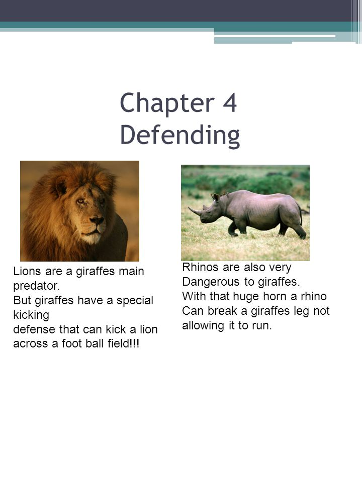 Chapter 4 Defending Rhinos are also very