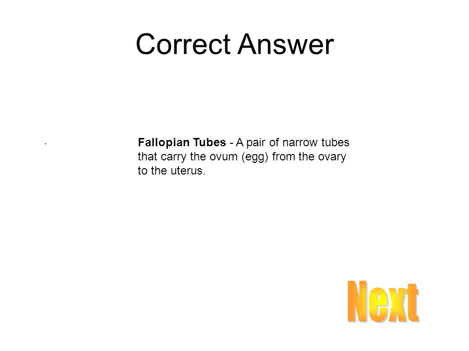 Correct Answer . Fallopian Tubes - A pair of narrow tubes that carry the ovum (egg) from the ovary to the uterus.