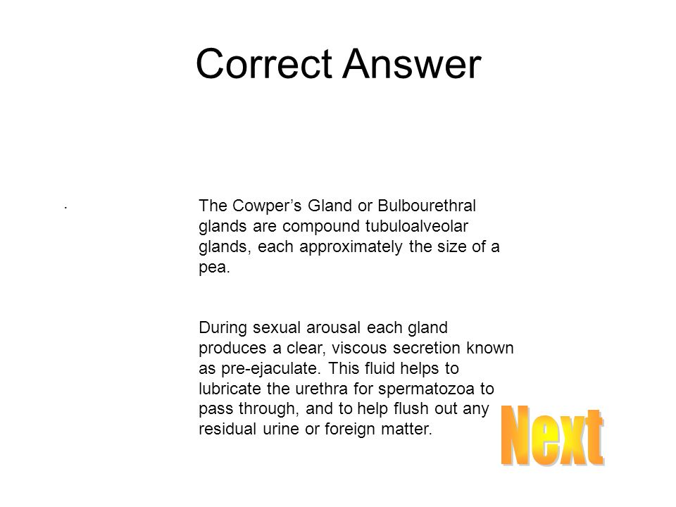 Correct Answer . The Cowper's Gland or Bulbourethral glands are compound tubuloalveolar glands, each approximately the size of a pea.
